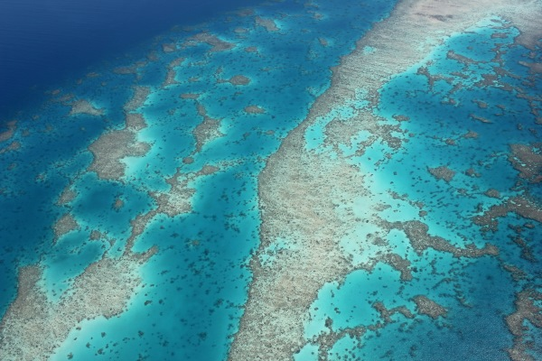 Stunning Reef off Cairns